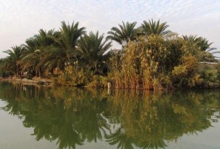 معرفی وعکس از تالاب شادگان