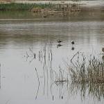 عکس ومطلب از خشکسالی تالاب گاو خونی