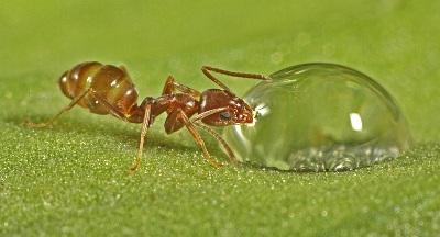 لانه مورچه ها