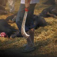 جشنواره گادهیمای  بزرگترین کشتارگاه حیوانات