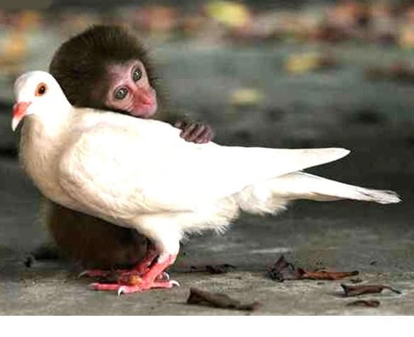 تصاویر باحال و خنده دار از حیوانات