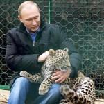 پوتین در کنار پلنگ ایرانی (سرنوشت پلنگ ایرانی در روسیه)