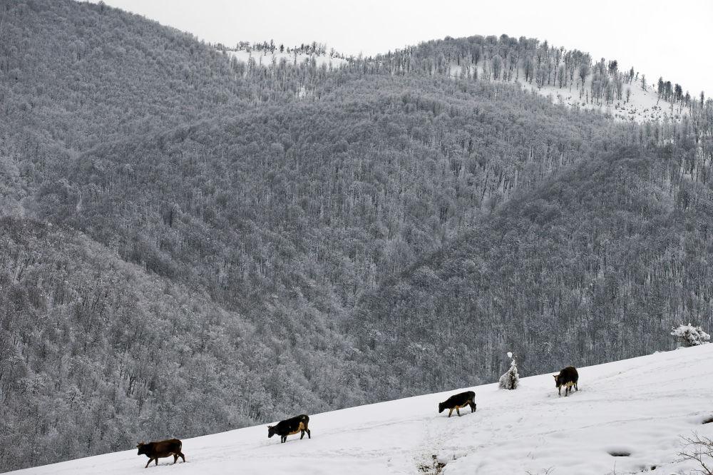 البرز در برف