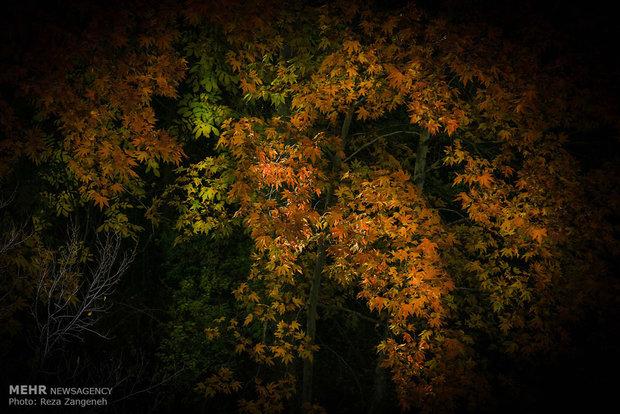 پاییز در کوچه باغ های همدان