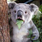 عکسهای  باحال خنده دار حیوانات