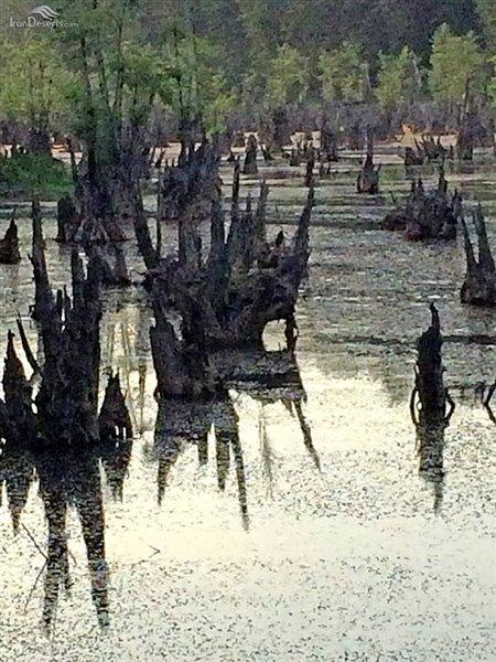 تالاب ارواح دریاچه ممرز نوشهر