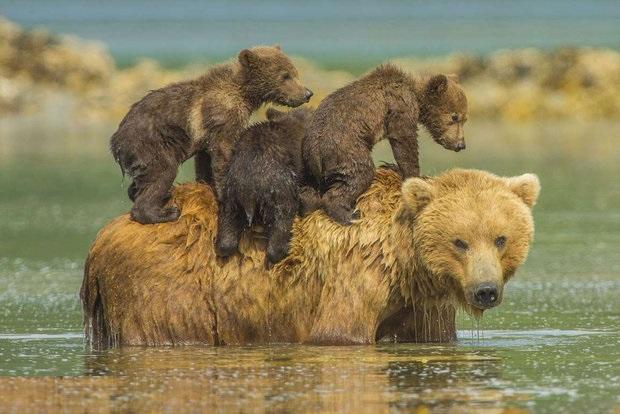 حس مادری در حیواناتحس مادری در حیوانات