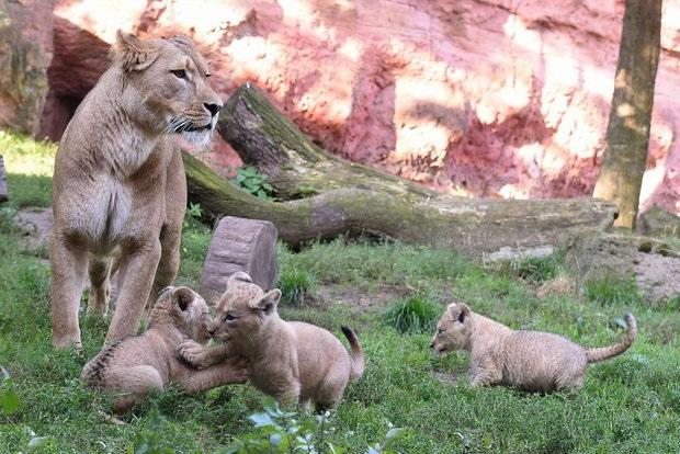 حس مادری در حیوانات