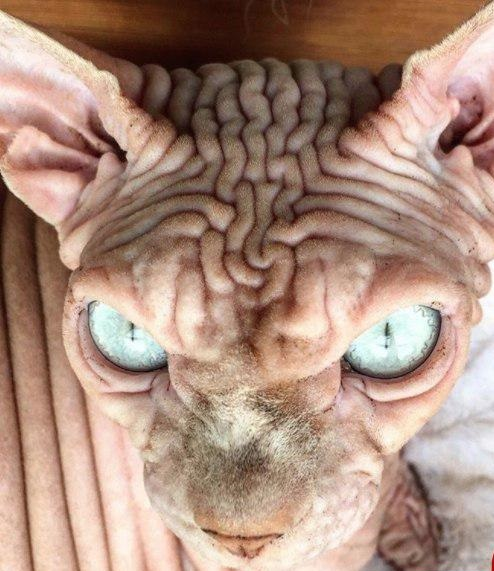 گربه ی معروف اینستاگرام ترسناک