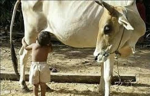 عکس باحال از حیوانات