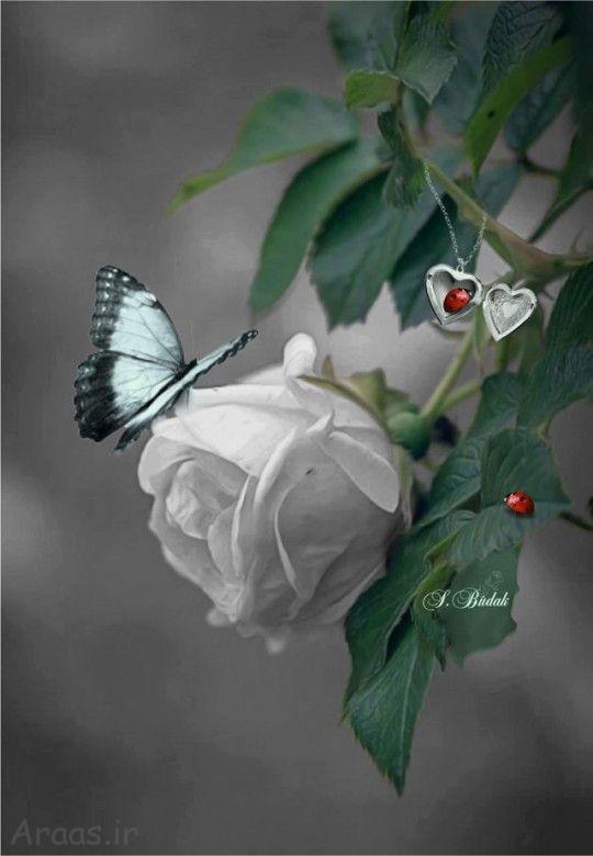 عکس گل و دسته گل